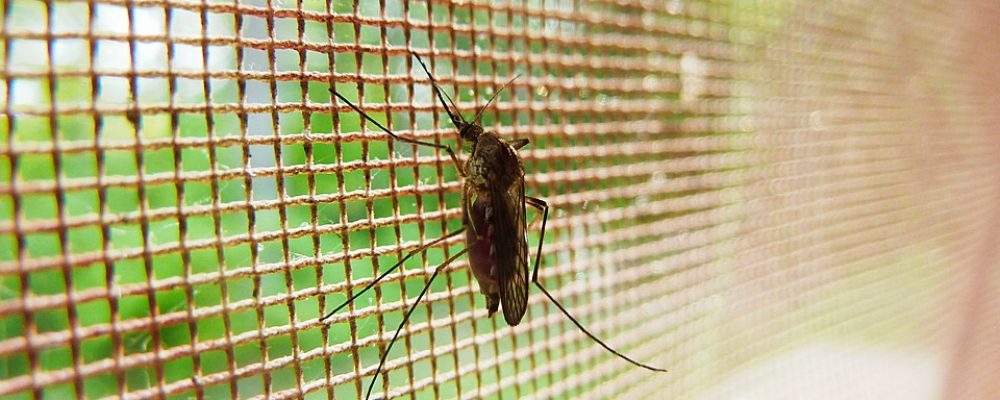 כך תמנעו מיתושים להיכנס אליכם הביתה